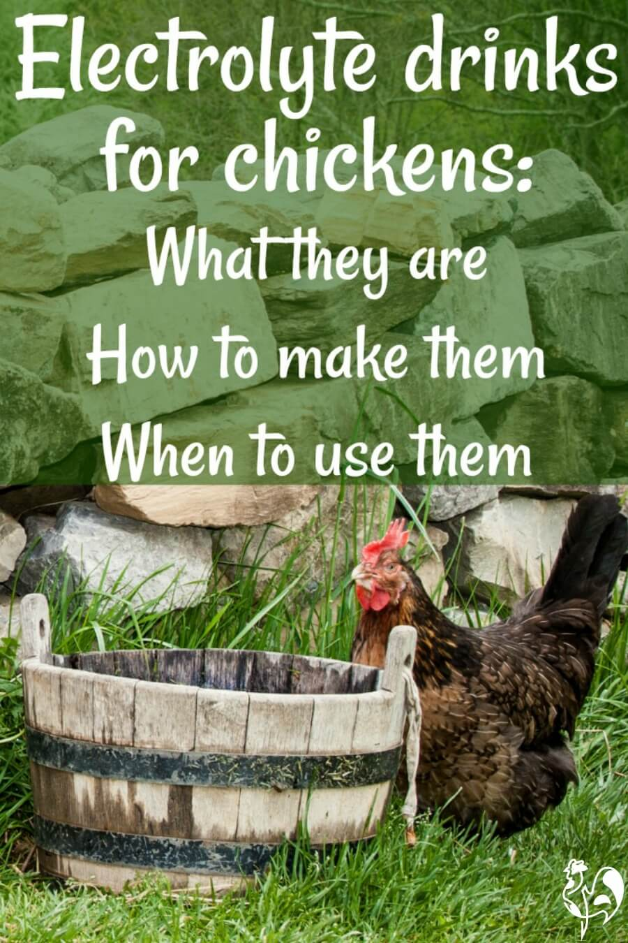 A Homemade Electrolyte Drink For Chickens