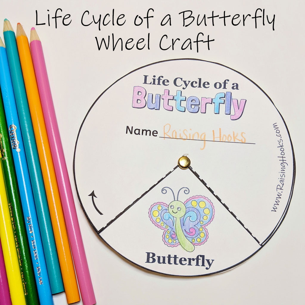 Life Cycle Of A Butterfly Tracing Worksheet