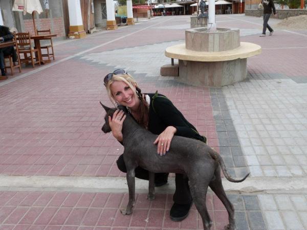 lainie_paracas_puppy