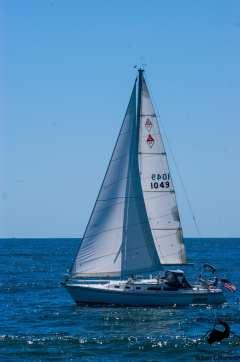 Random Sail Boat