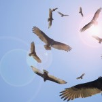 Stand Up, The Vultures Are Circling