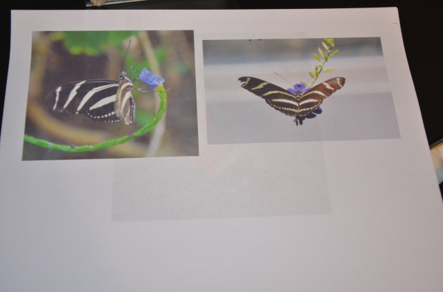 butterflybook&experiments 010