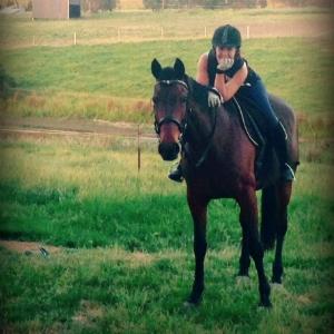 standardbred riding horse