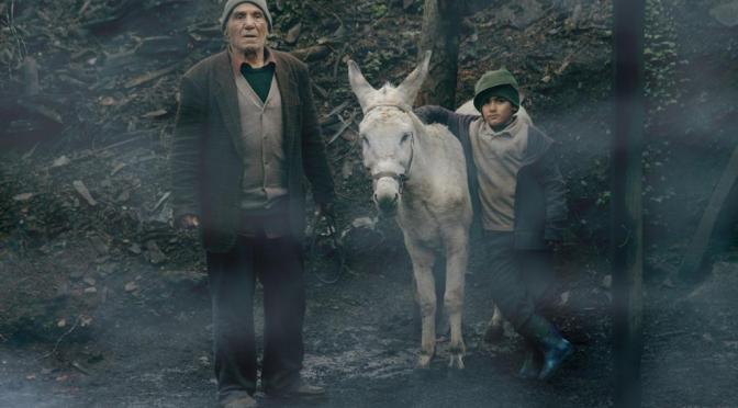 Cinema Donkey Review