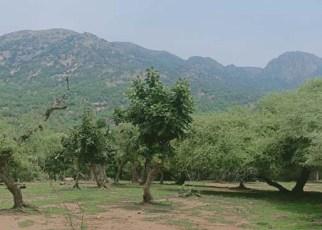 Jalore received maximum rainfall here