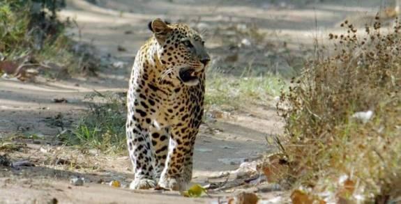 Image result for kumbhalgarh wildlife sanctuary safari Rajasthan Tourism