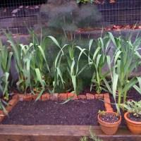 More gardening inspiration