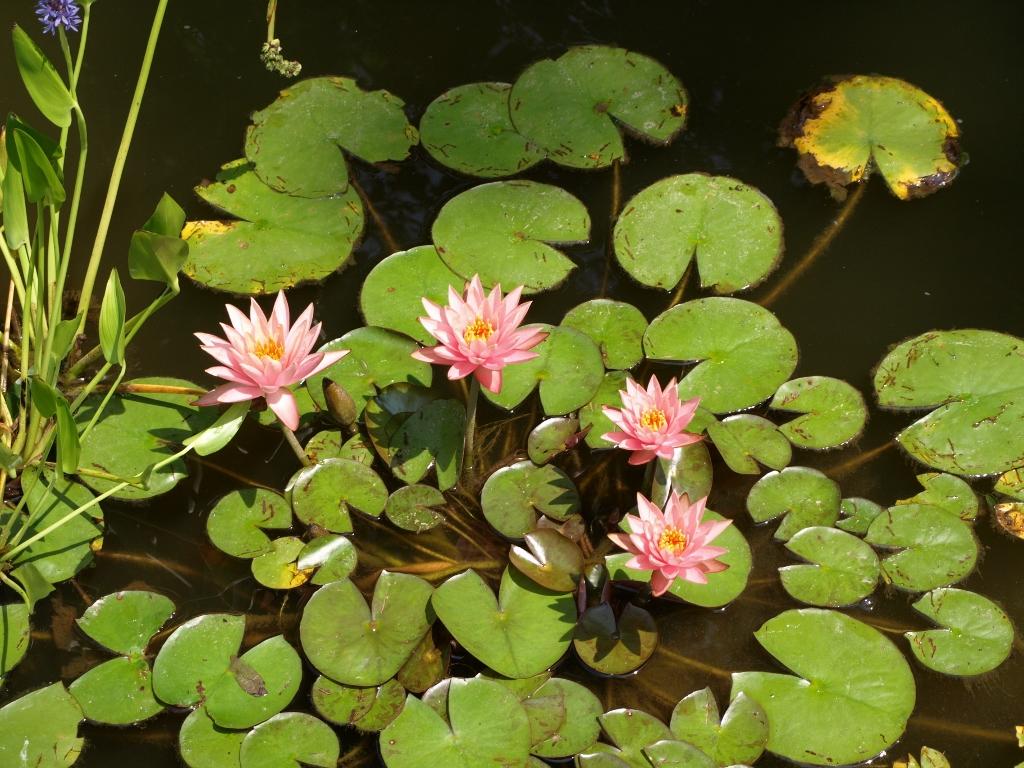 Artificial Water Plants Ponds