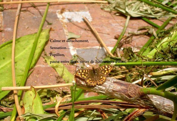 Contempler la nature papillon haiku