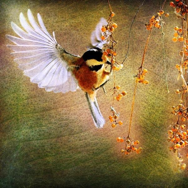 portrait chinois oiseau en vol peinture ailes déployés printemps nature