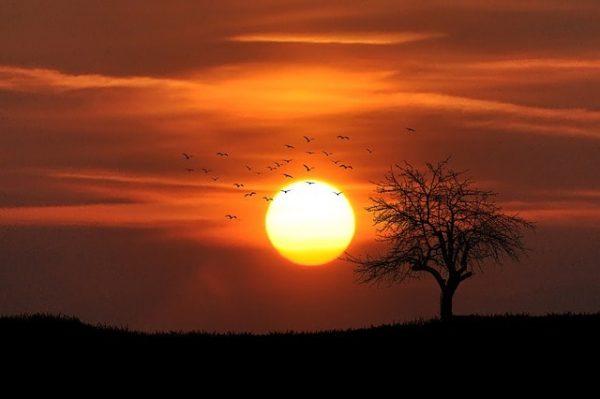 Coucher de soleil paysage lumière rouge ombre d'oiseaux ombre d'un arbre