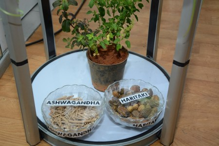 Nutrilite, Amway, herbs