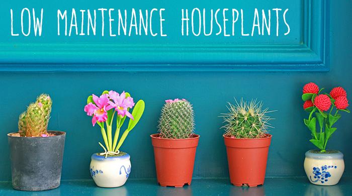3 Low Maintenance Houseplants