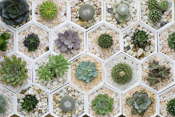 Mini succulents and cacti