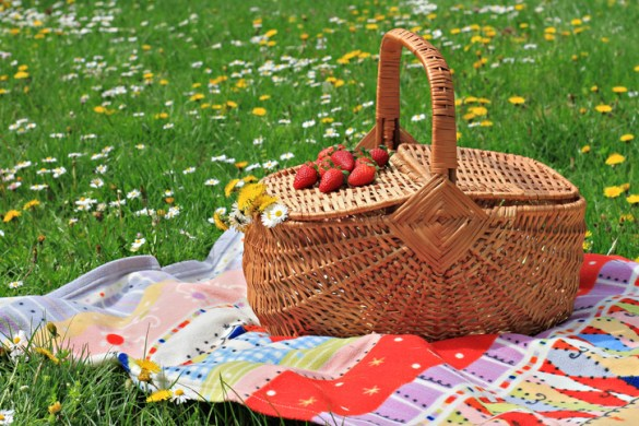 Picnic basket and blanket on grass