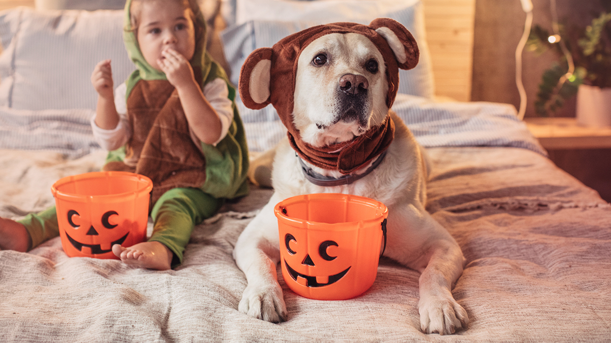 Baby and dog in Halloween costumes