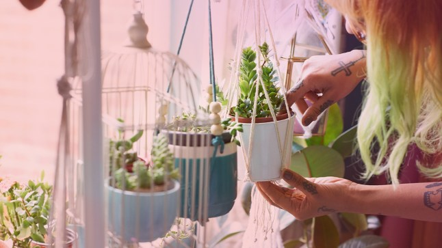 10 Easy Houseplants That Won't Die On You