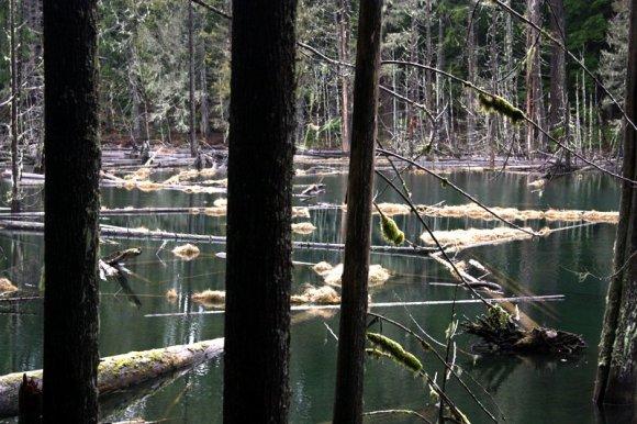 Lake landscape perspective shot