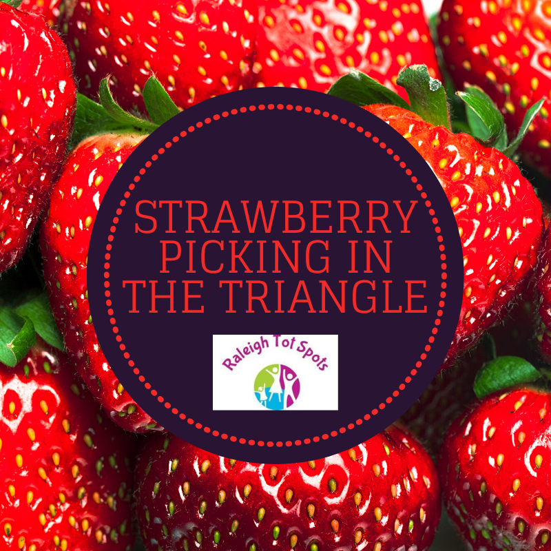 Strawberry Picking In The Triangle Raleigh Tot Spots