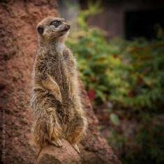 Fotografieren im Zoo