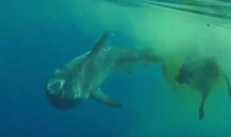 fish-hai