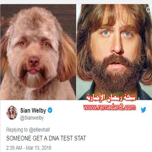 Hund.Genau-Wie-Mensche2