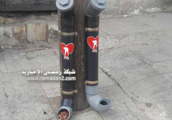 Halab-Syria-Katzen-1