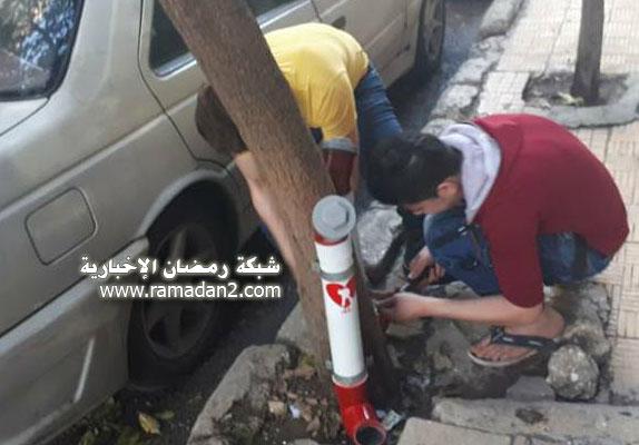 Halab-Syria-Katzen-2