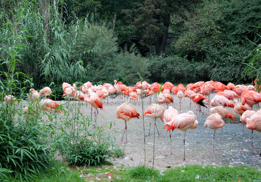 stedentrip_praag_dierentuin