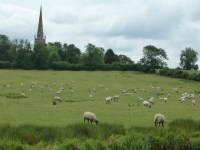 Country with sheep.