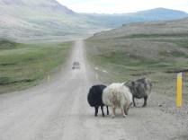 Iceland Highway 1.
