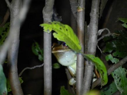 Frog in the dark.