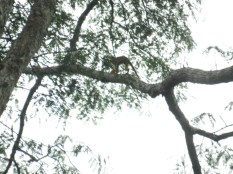 Monkey in a tree - the best of about 50 photos.