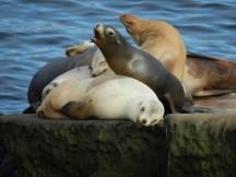 Sea lions at La Jolla.