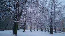 Snow on trees in Tallinn.