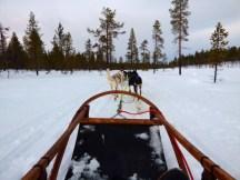 Dog sled.