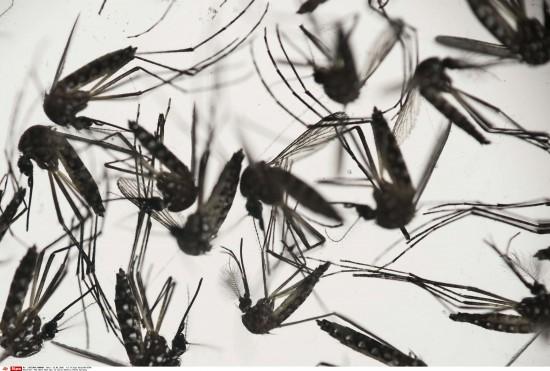 zika-2