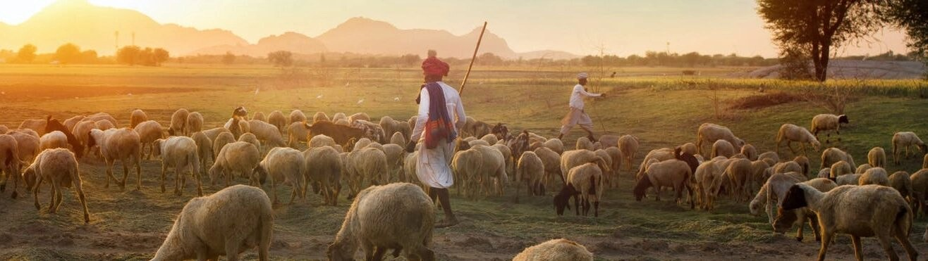 The compassion of the good shepherd