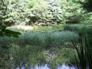 lac Covoi
