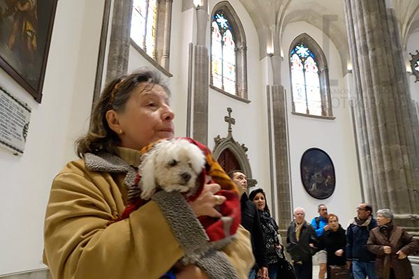 Público visitando La Catedral de La Laguna