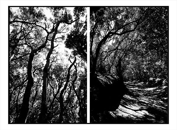 Bosque de Laurisilva