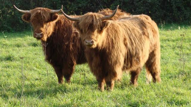 Nos Vaches Ranch De LEsprance
