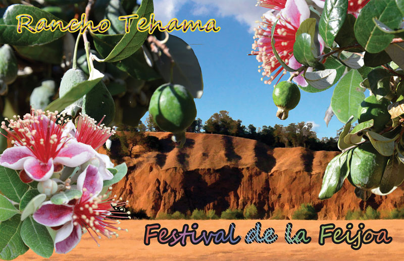 Feijoa Festival in Rancho Tehama, California