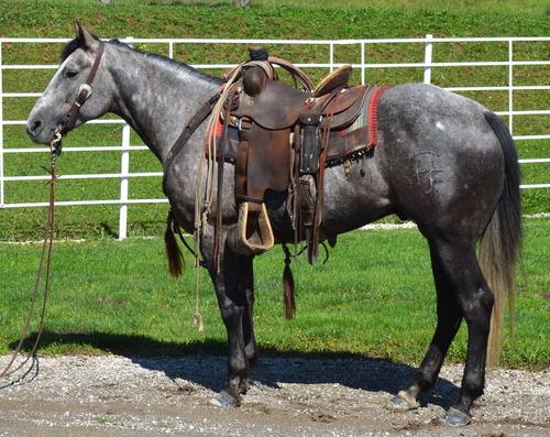 Delivery Ranch Sedan King