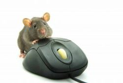 mouse on mouse