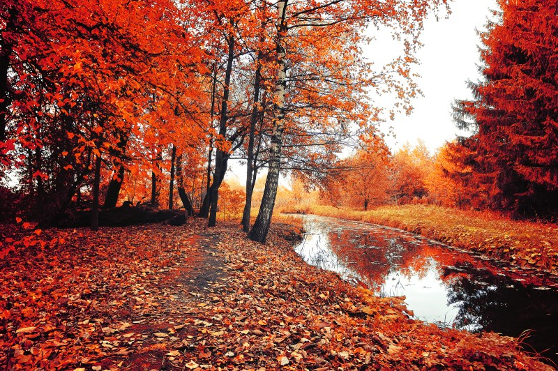 """Translated Poem: A Selection from Pushkin's """"Autumn"""""""