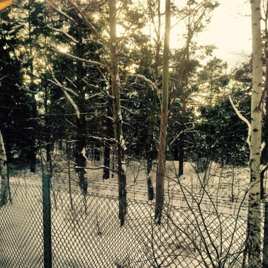 Golden winterland