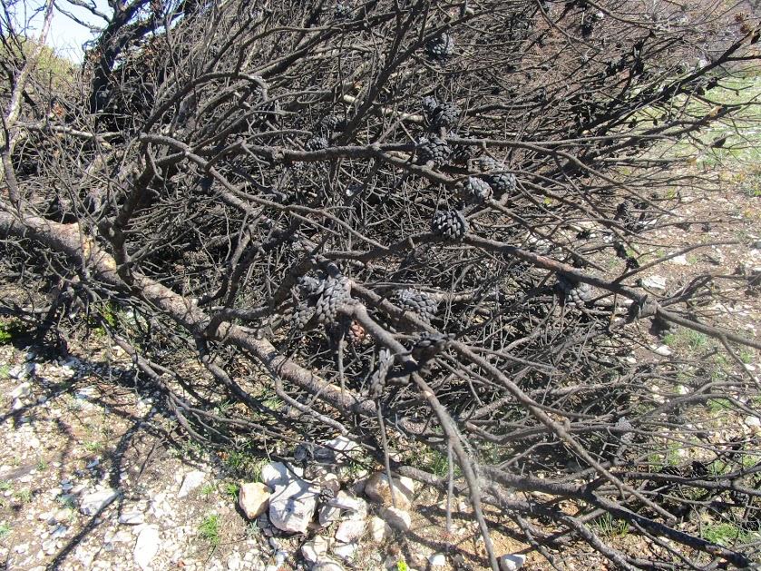 Plateau ravagé par un incendie