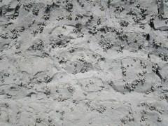 mur avec coquillages