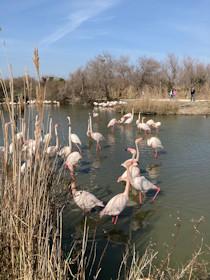 Parc ornithologique du Pont-de-Gau, Saintes-Maries-de-la-Mer